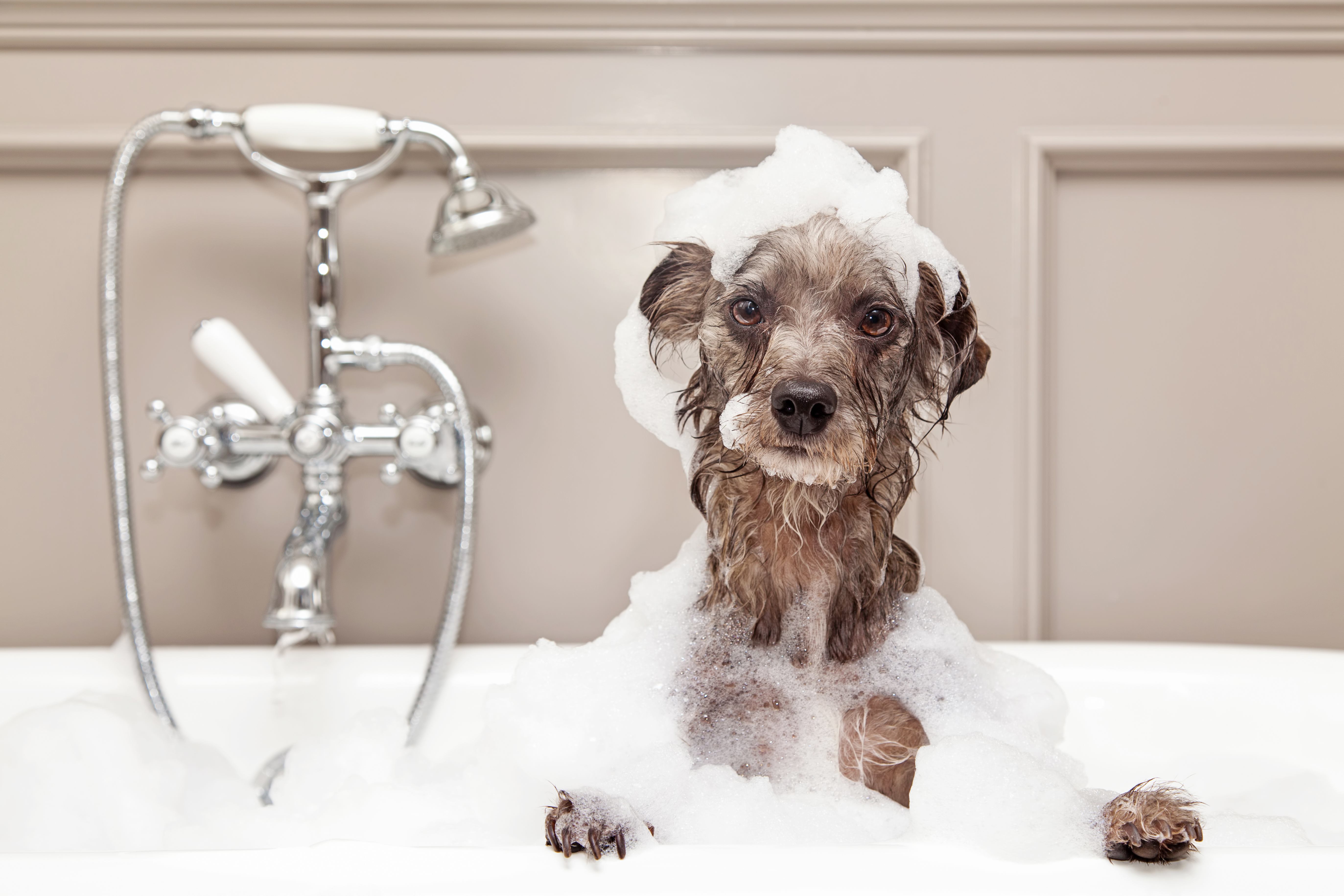 Self service dog washing funny dog taking bubble bath solutioingenieria Images